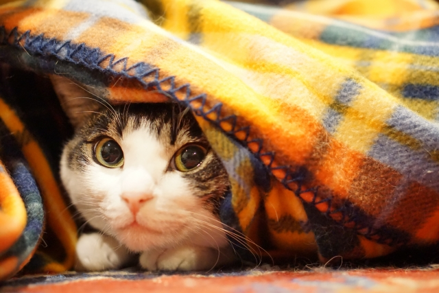 ソファとコタツは共存できるの?寒い季節もソファを楽しみたい!